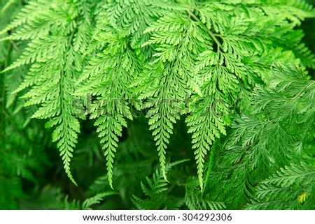 fresh green fern leave in the nature