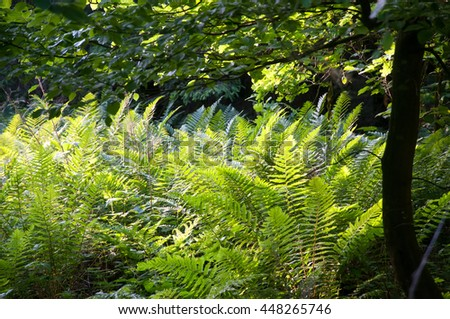 Fresh green fern leaves in forest - stock photo