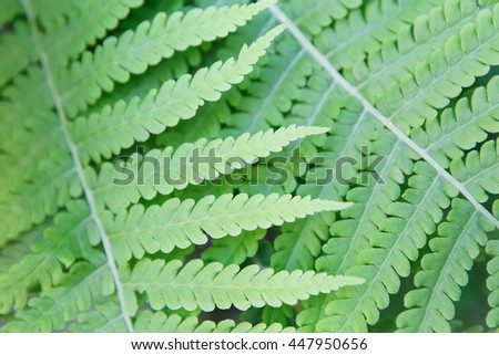 Fresh green fern leaves texture closeup. Natural foliage, botanic background. - stock photo