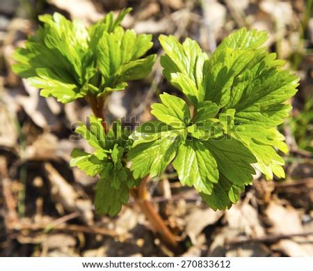 Fresh green flora - stock photo