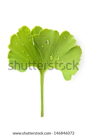 Fresh green ginkgo biloba leaf with dew drops isolated on white background, top view. Healthy lifestyle concept. - stock photo
