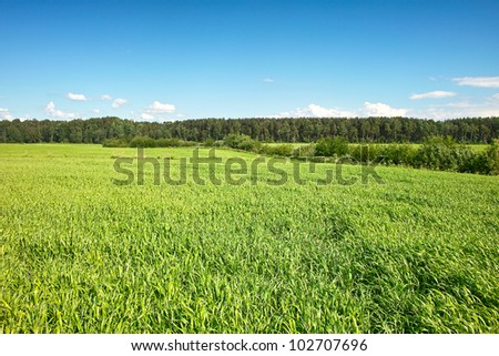 Fresh green grass and forest on wavy ground under blue sky - stock photo