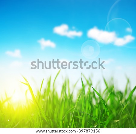 Fresh green grass closeup. Soft Focus. Nature Background - stock photo