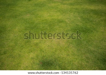 Fresh green grass field background, close up view. - stock photo