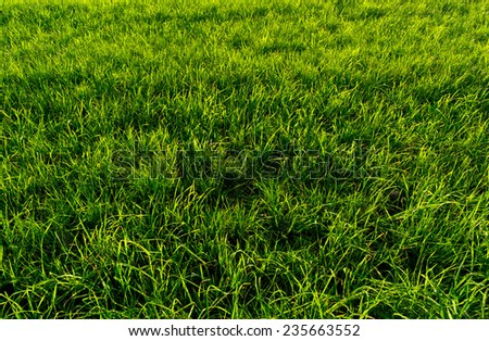 Fresh green grass frame filling close up view - stock photo