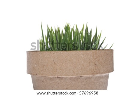 Fresh Green Grass in a Cardboard Pot.  Isolated on White with a Clipping Path.