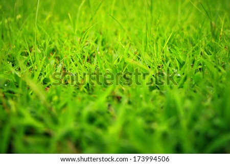 Fresh green grass in public park, select focus and ant view over a green grass out of focus background of grass - stock photo