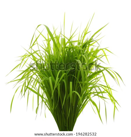 Fresh green grass isolated on white - stock photo