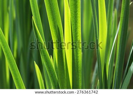 fresh green grass leaves - green background - stock photo