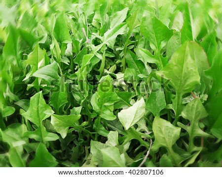 Fresh green grass. Natural organic background. - stock photo