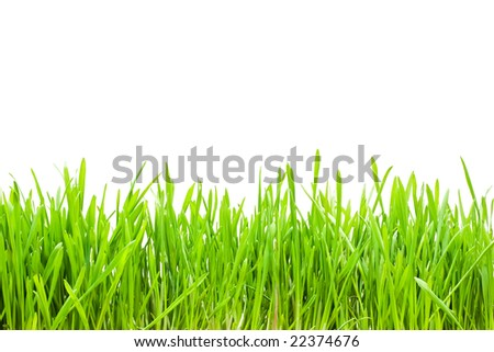 Fresh green grass on white isolated background