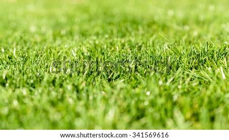 Fresh Green Grass Texture Background - stock photo