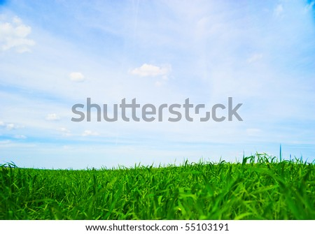 fresh green grass with bright blue sky background - stock photo