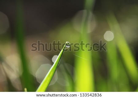 Fresh green grass with dew drop - stock photo
