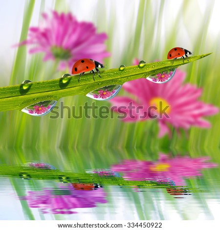 Fresh green grass with dew drops and ladybugs closeup. Nature Background. - stock photo