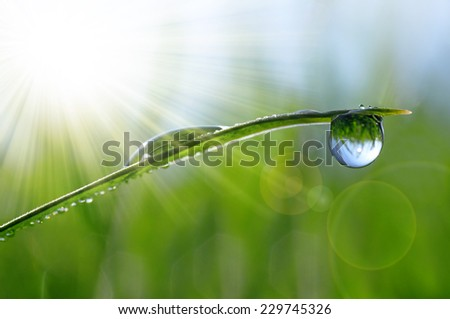 Fresh green grass with dew drops closeup. Natural background.  - stock photo