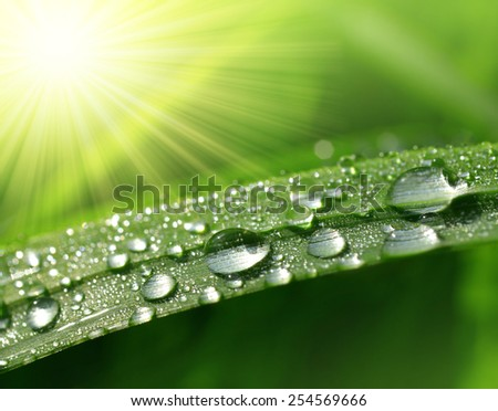 Fresh green grass with dew drops closeup. Nature Background - stock photo