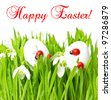 fresh green grass with easter eggs on white background. happy easter. card concept - stock photo