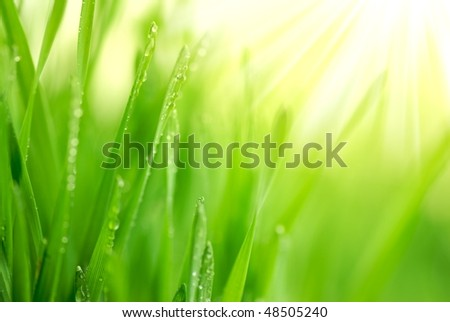 Fresh green grass with water droplet in sunshine(Shallow Dof) - stock photo