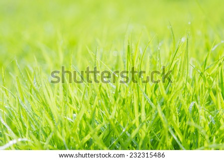 Fresh green grass with water droplet on sunshine for background - stock photo