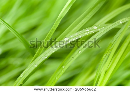 Fresh green grass with water droplet (Shallow Dof) - stock photo