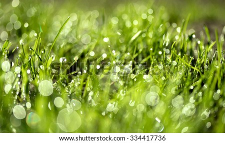 fresh green grass with water drops, blurred bokeh
