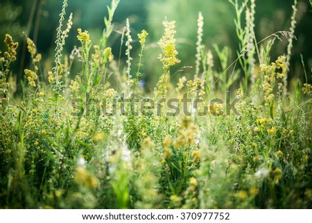 Fresh green grass with water drops on the background of sunlight beams. Soft focus - stock photo