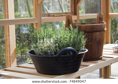 fresh green herbs planted in the pot - stock photo