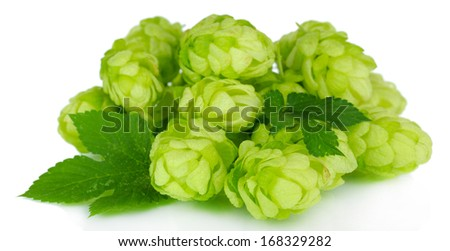 Fresh green hops, isolated on white - stock photo