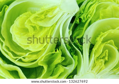 Fresh Green Iceberg lettuce . - stock photo
