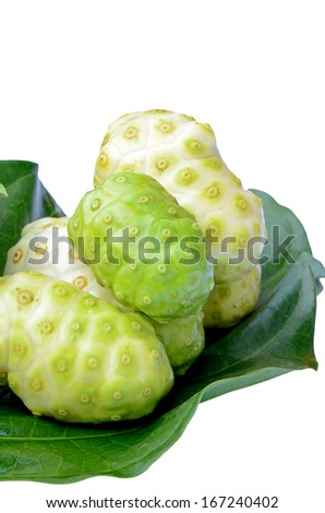 Fresh green leaf and fresh fruit of herbal food called Indian Mulberry or Noni (Morinda citrifolia  L.). - stock photo