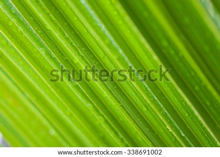 Fresh green leaf backgrounds. Shallow depth of field