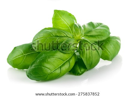 Fresh green leaf basil. Isolated on white background - stock photo