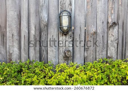 Fresh green leaf plant over wood fence background - stock photo