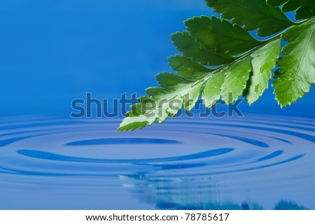 Fresh green leaf reflected in  water - stock photo