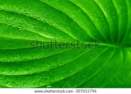 Fresh green leaf with drops, close up - stock photo