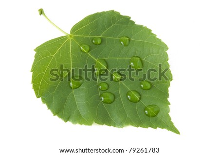 Fresh green leaf with water drops isolated on white