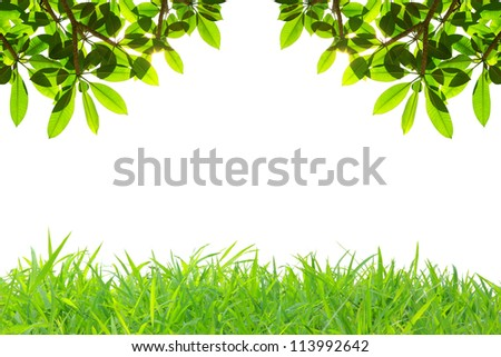 Fresh Green Leaves at the top and frame of grass at below edge - stock photo