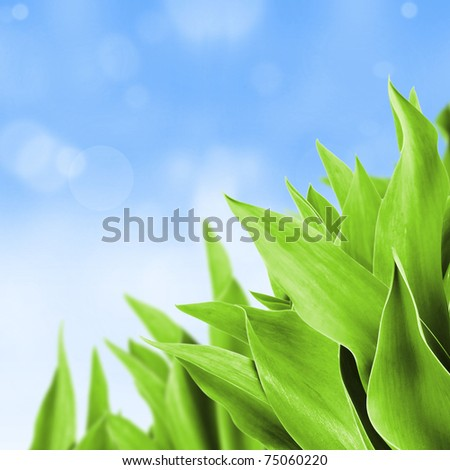 Fresh green leaves background.Shallow depth of focus