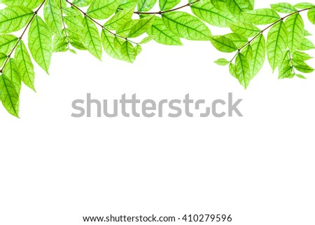 Fresh Green leaves frame isolated on white background - stock photo