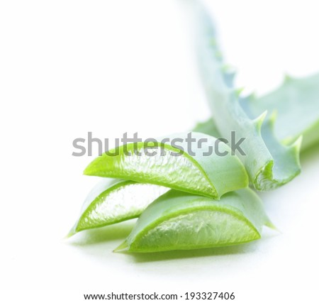 Fresh green leaves of aloe vera plant - stock photo