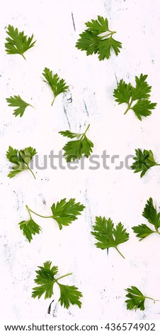 Fresh green leaves of parsley on an old white wooden table. Food background. - stock photo