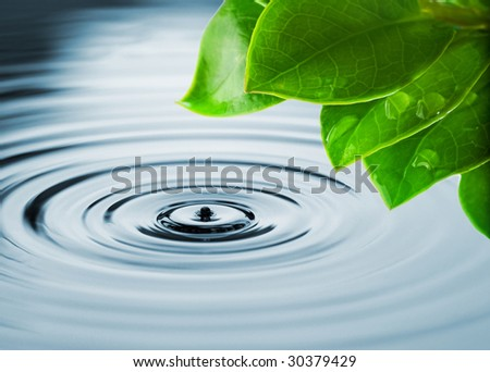 Fresh green leaves reflected in water - stock photo