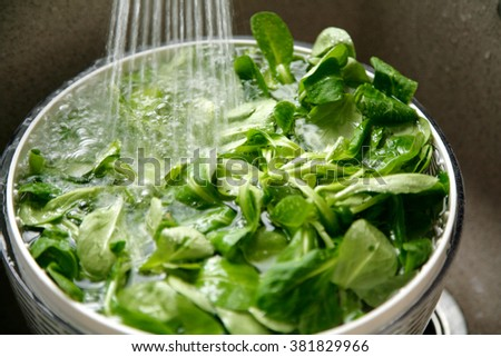 Fresh green lettuce in a bowl of water - stock photo