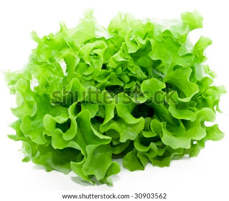 Fresh green Lettuce salad on white isolated background - stock photo