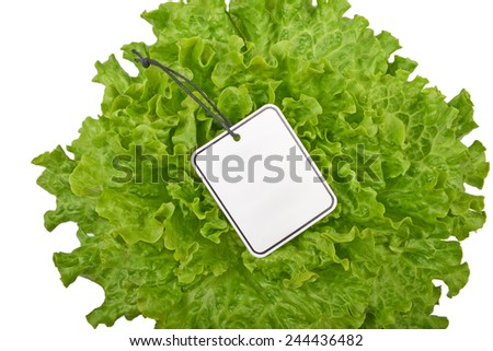 Fresh green lettuce with tag, isolated on white background - stock photo