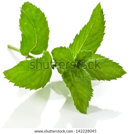 Fresh green mint close up macro shot isolated on white background