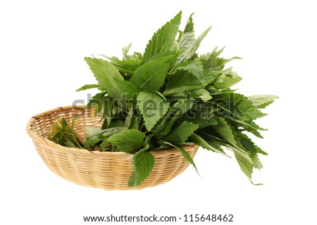 Fresh green mint on white background.