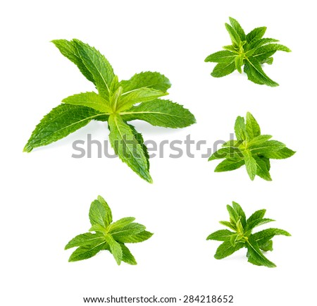 Fresh green mint.Set.  - stock photo
