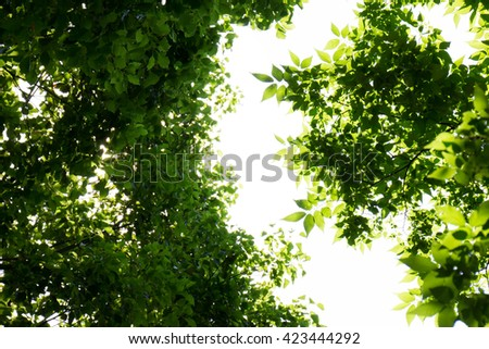 Fresh green of sunshine filtering through foliage